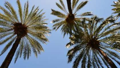 Relax in Malaga - Palm trees